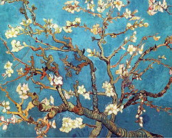 Blue Almond Blossoms